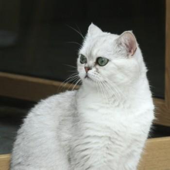Profilbild von Yara