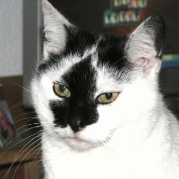 Profilbild von Koksi