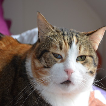 Profilbild von Paula