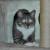 Profilbild von Krümel,das Katzenmädchen