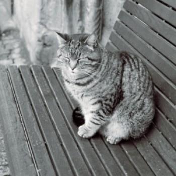 Profilbild von Schnurri