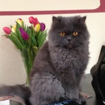 Profilbild von Chester