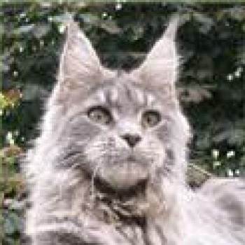Profilbild von Manitou
