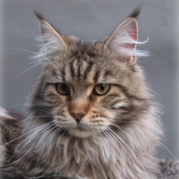 Profilbild von † X\'Ample