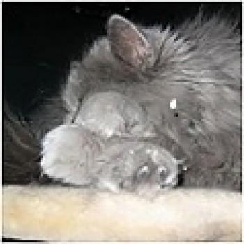 Profilbild von Caruso