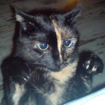 Profilbild von Kira
