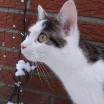 Profilbild von Cookie