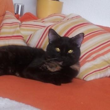 Profilbild von Maggi