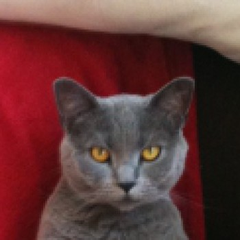 Profilbild von † Klara