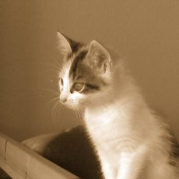 Profilbild von Fanny