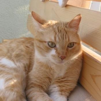 Profilbild von Oskar