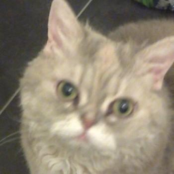 Profilbild von Nelly