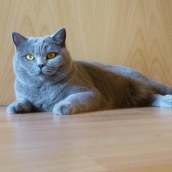 Profilbild von Mausi
