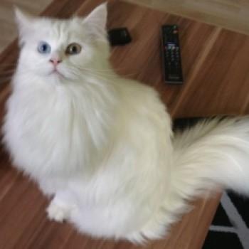 Profilbild von Amy