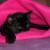 Profilbild von Sasha