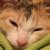 Profilbild von Susi