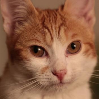 Profilbild von Linchen