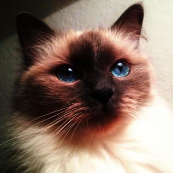 Profilbild von Tapsy