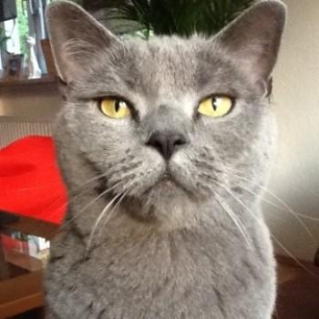 Profilbild von † Eddie