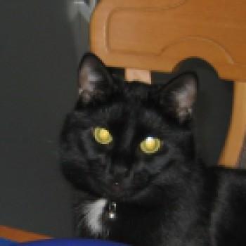Profilbild von Pepino