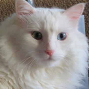Profilbild von Timmy