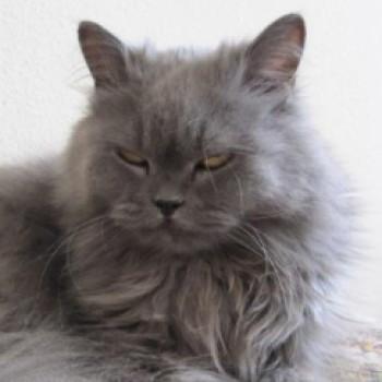 Profilbild von Paula .. Prinzessin Liselotte