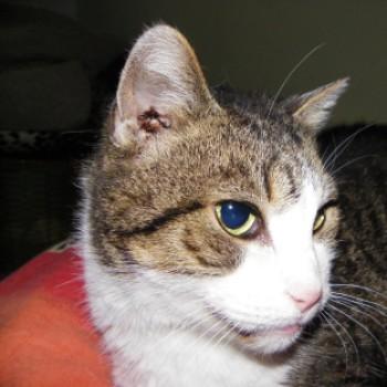 Profilbild von † filutek