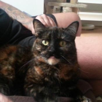 Profilbild von Pina