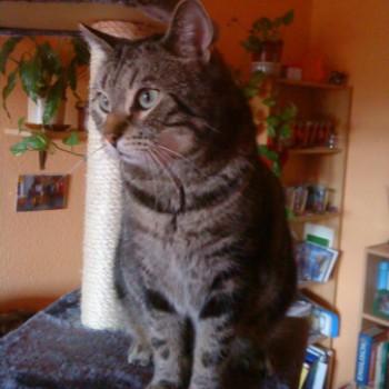 Profilbild von Lucky der Flietzer