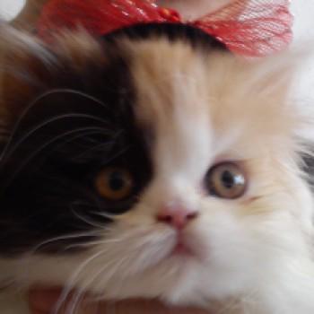 Profilbild von Mia