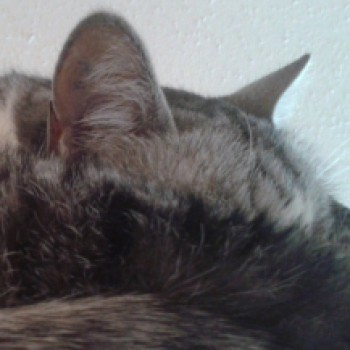 Profilbild von Felina
