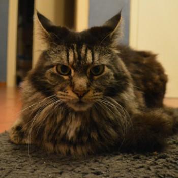 Profilbild von Monty