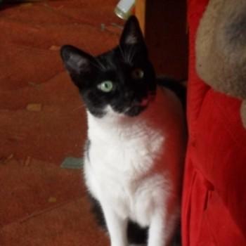 Profilbild von Alice