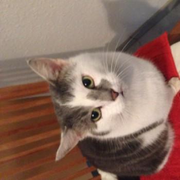 Profilbild von Beissi