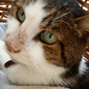 Profilbild von † Sassie