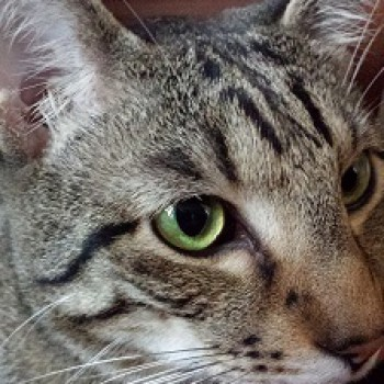 Profilbild von Carlos (Cookie)