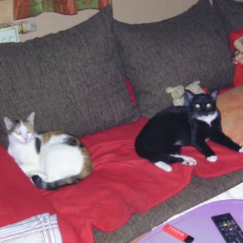 Profilbild von Bella und Bobo