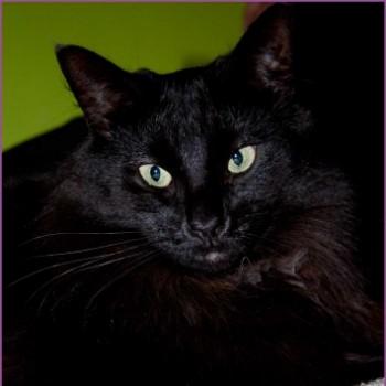 Profilbild von Black Pearl