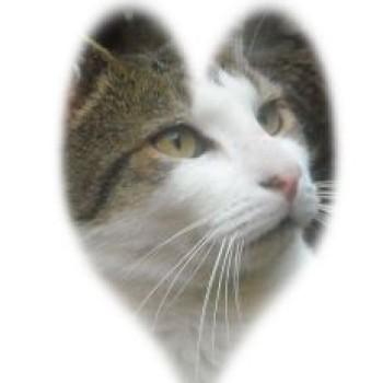 Profilbild von Carlito der Liebe