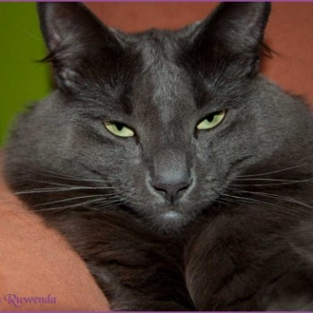 Profilbild von Lady Guinevere