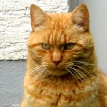 Profilbild von † Fuchsi