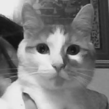 Profilbild von Lorenzo