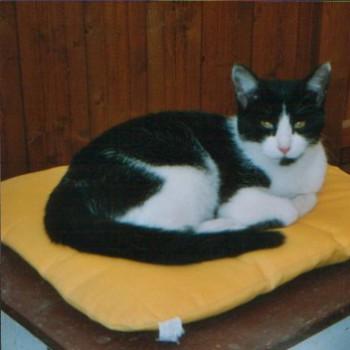Profilbild von Mikesch, der 2. ( www.tierhaltung-mark.de )