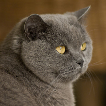 Profilbild von Farina