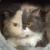 Profilbild von † Bijou