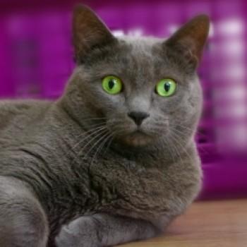 Profilbild von Kimba