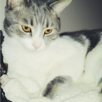 Profilbild von Woody