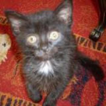 Profilbild von Lucky und Kira