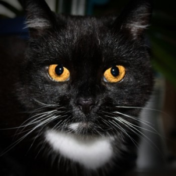 Profilbild von † Hermine