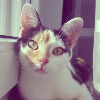 Profilbild von Phoebe (Fibi)